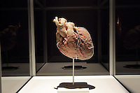 NO FEE PICTURES.1/2/12 A heart at the opening of The Human Body Exhibition—an all new exhibition featuring more than 200 full and partial real human body specimens, makes its world debut at The Ambassador Theatre this Spring. This incredible exhibition showcases carefully dissected specimens to provide a window into the miraculous way the body functions and gives visitors the opportunity to see exactly what lies beneath their skin. The Human Body Exhibition today Thursday 02 February, 2012 at The Ambassador Theatre for a limited engagement. Picture:Arthur Carron/Collins