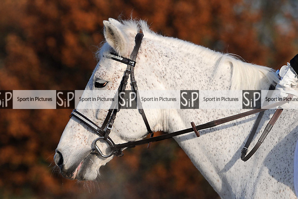 Stapleford Abbotts. United Kingdom. 30 November 2019. Class 2. Unaffiliated dressage. Brook Farm training centre. Stapleford Abbotts. Essex. UK. Credit Ellen Szalai/Sport in Pictures.~ 30/11/2019.  MANDATORY Credit Ellen Szalai/SIP photo agency - NO UNAUTHORISED USE - 07837 394578