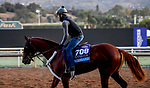 October 28, 2019 : Breeders' Cup Juvenile  entrant Scabbard, trained by Eddie Kenneally, exercises in preparation for the Breeders' Cup World Championships at Santa Anita Park in Arcadia, California on October 28, 2019. John Voorhees/Eclipse Sportswire/Breeders' Cup/CSM