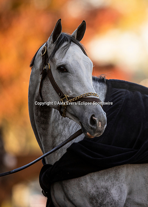November 3, 2020: Valiance, trained by trainer Todd A. Pletcher gets a bath after finishing preparation for the Breeders' Cup Distaff at  Keeneland Racetrack in Lexington, Kentucky on November 3, 2020. Alex Evers/Eclipse Sportswire/Breeders Cup