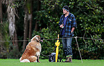 A man and his best friend enjoy a quiet brew while watching the action. Fox Memorial Rugby League, Northcote Tigers v Howick Hornets, Birkenhead War Memorial Park Auckland, Saturday 22nd July 2017. Photo: Simon Watts / www.bwmedia.co.nz