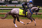 LOUISVILLE, KY - APRIL 23: Creator (Tapit x Morena, by Privately Held) gallops on the track, ridden by exercise rider Abel Flores at Churchill Downs, Louisville KY, in preparation for the Kentucky Derby. Owner WinStar Farm LLC, trainer Steven M. Asmussen. (Photo by Mary M. Meek/Eclipse Sportswire/Getty Images)