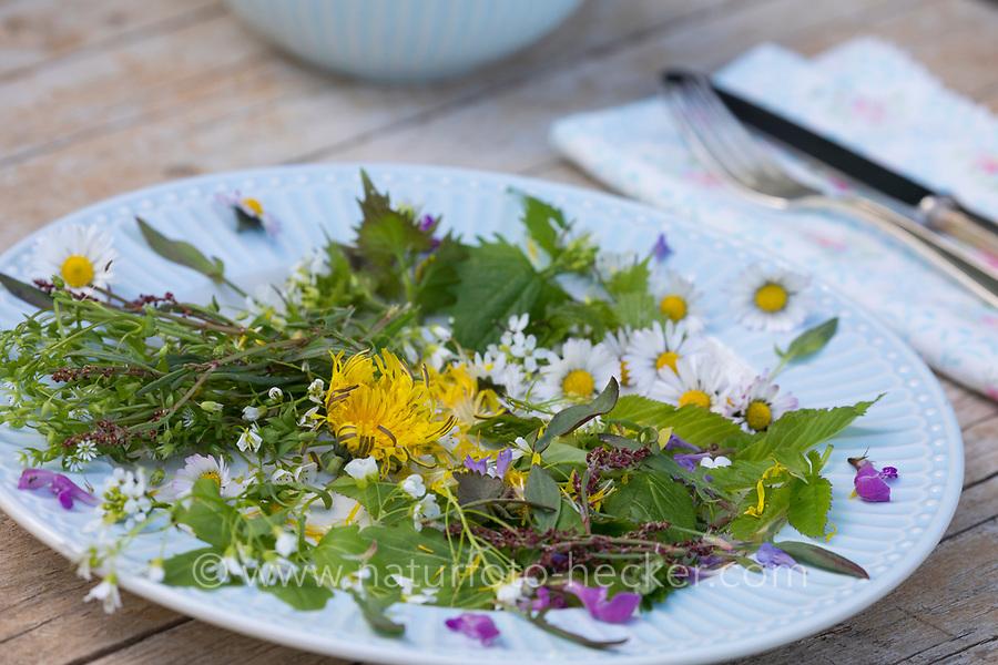 Frühlingskräutersalat, Frühlings-Kräutersalat, Frühlingskräuter-Salat, Frühlingssalat, Frühlings-Salat, Salat aus Wildgemüse, Wildgemüsesalat, Wildgemüse-Salat, Frühlingskräuter, salad. Löwenzahn, Wiesen-Löwenzahn, Wiesenlöwenzahn, Gemeiner Löwenzahn, Gewöhnlicher Löwenzahn, Kuhblume, Taraxacum officinale, Taraxacum sect. Ruderalia, Dandelion, Dent de lion. Gewöhnliche Knoblauchsrauke, Knoblauchsrauke, Knoblauchrauke, Knoblauch-Rauke, Knoblauchs-Rauke, Lauchkraut, Knoblauchskraut, Knoblauchhederich, Knoblauchshederich, Alliaria petiolata, Hedge Garlic, Jack-by-the-Hedge, Garlic Mustard, garlic root, Alliaire, L'Alliaire officinale, Herbe à ail. Gewöhnlicher Gundermann, Gundermann, Efeublättriger Gundermann, Echt-Gundelrebe, Gundelrebe, Glechoma hederacea, Alehoof, Ground Ivy, ground-ivy, gill-over-the-ground, creeping charlie, tunhoof, catsfoot, field balm, run-away-robin, le Lierre terrestre, Le gléchome lierre terrestre, le lierre terrestre commun. Taubnessel, Lamium, Lamium spec., deadnettle. Bitteres Schaumkraut, Bitter-Schaumkraut, Falsche Brunnenkresse, Bitter-Schaumkraut, Bitterkresse, Wildkresse, Kressen-Schaumkraut, Cardamine amara, Large Bitter-cress, Large Bittercress. Gänseblümchen, Bellis perennis, English Daisy, common daisy, lawn daisy, la Pâquerette, la pâquerette vivace. Kleiner Sauerampfer, Kleiner Ampfer, Zwerg-Sauerampfer, Rumex acetosella, Sheep Sorrel, red sorrel, sheep's sorrel, field sorrel, sour weed, La petite oseille, la vinette. Gewöhnlicher Giersch, Giersch, Geißfuß, Aegopodium podagraria, ground elder, herb gerard, bishop's weed, goutweed, gout wort, snow-in-the-mountain, English masterwort, wild masterwort, L'égopode podagraire, herbe aux goutteux, podagraire, Aegopode