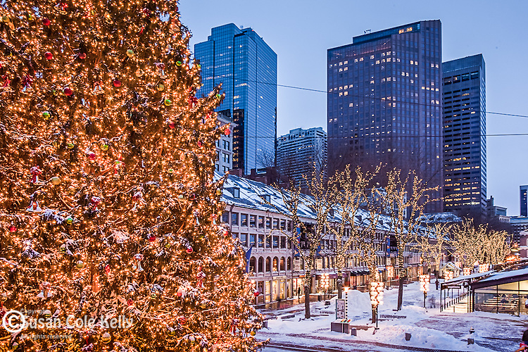 A snowy Christmas tree at Quincy Market, Faneuil Hall Marketplace, Boston, MA