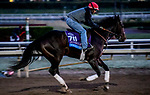 October 28, 2019 : Breeders' Cup Juvenile  entrant Wrecking Crew, trained by Peter Miller, exercises in preparation for the Breeders' Cup World Championships at Santa Anita Park in Arcadia, California on October 28, 2019. John Voorhees/Eclipse Sportswire/Breeders' Cup/CSM