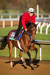 October 29, 2015:  Twilight Eclipse, trained by Thomas Albertrani and owned by West Point Thoroughbreds, Inc., exercises in preparation for the Longines Breeders' Cup Turf at Keeneland Race Track in Lexington, Kentucky. Alex Evers/ESW/CSM