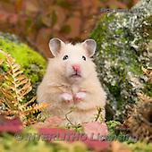 Xavier, ANIMALS, REALISTISCHE TIERE, ANIMALES REALISTICOS, photos+++++,SPCHHAMSTER161,#A# ,funny
