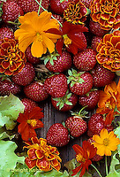 ST04-019b  Strawberries harvested with marigold and bright lights cosmos flowers