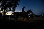 October 20, 2018 : Breeders' Cup Classic contender Accelerate with Juan Leyva comes off the track after working out at Santa Anita Park on October 20, 2018 in Arcadia, California. Evers/ESW/CSM