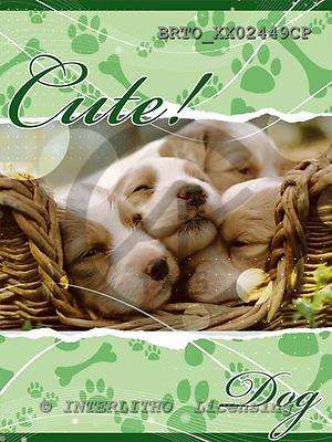 Alfredo, ANIMALS, dogs, photos+++++,BRTOXX02449CP,#a# Hunde, perros