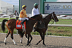 Departing ridden by Brian Hernandez, Jr. finishes third in The 100th Running of The Louisiana Derby Stakes at Fair Grounds Race Course in New Orleans, Louisiana on March 30, 2013. (( Special transmission of horses in the Top 25 for points for the 2013 KentuckyDerby ))