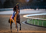 Bon Raison, trained by trainer Jack Sisterson, exercises in preparation for the Breeders' Cup Sprint at Keeneland 10.30.20.