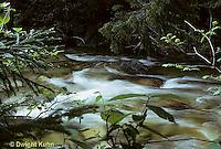 WF04-001z  Forest stream, Baxter State Park, Maine