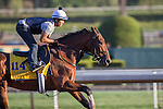 OCT 29 2014:Zivo, trained by Chad Brown, exercises in preparation for the Breeders' Cup Classic at Santa Anita Race Course in Arcadia, California on October 29, 2014. Kazushi Ishida/ESW/CSM