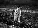 Point Breeze:  Helen Stewart working in Grandpa's Victory Garden. During this time the Stewart's lived at 6705 Thomas Street in Point Breeze