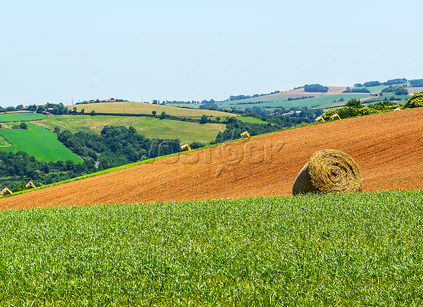 Country landscape in Tarn (France) at summer