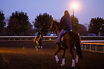 November 4, 2020: Scenes from morning workouts at Keeneland Racetrack in Lexington, Kentucky on November 4, 2020. Gabriella Audi/Eclipse Sportswire/Breeder's Cup/CSM
