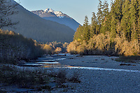East Fork Quinault River Valley, Olympic National Park, Washington.  April.  Evening light.
