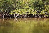 Mangroves reflected in the water on the intercoastal waterway near St. Petersberg, Florida.