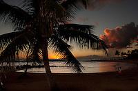 A visitor taking photos by a palm tree at sunset, Brennecke's Beach, Poipu, Kauai.