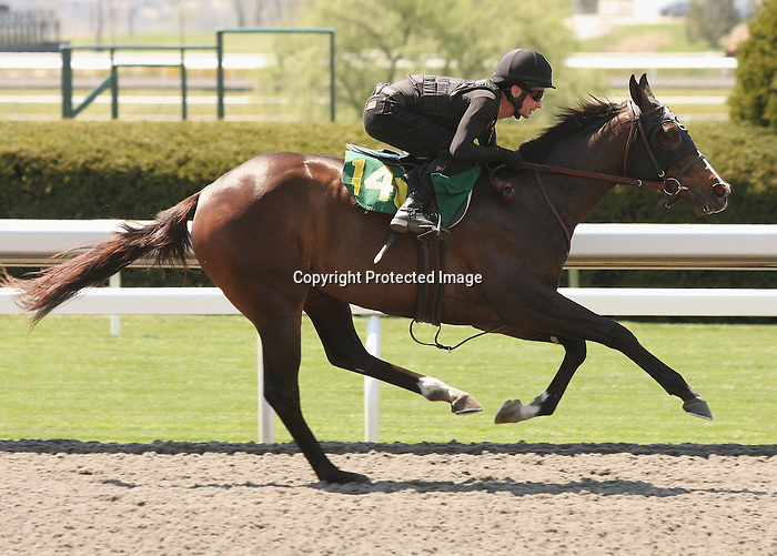 07 April 2011.  Hip #140 Medaglia d'oro - Fist Move filly, consigned by Niall Brennan.