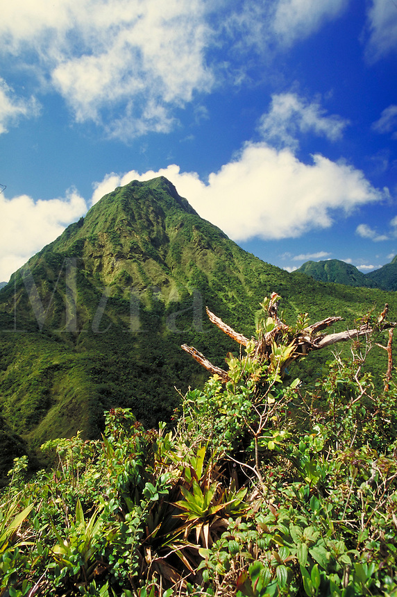 Morne Watt view from the Sharks Tooth ,Morne Triois Pitons National Park, island of Dominica , West Indies. Morne Triois Pitons Nat. Pk., Dominica West Indies.