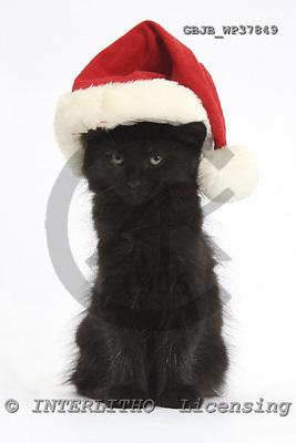 Kim, CHRISTMAS ANIMALS, photos, GBJBWP37849,#XA# stickers