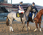Mudflats  post parade.  Favorite Vyjack with Cornelio Velasquez holds off 41 - 1 longshot Siete de Oros to win143rd running of the Grade II Jerome Stakes for 3-year olds, going 1 mile 70 yards on the inner dirt, at Aqueduct Racetrack.  Trainer Rudy Rodriguez.  Owner Pick Six Racing **