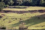 Animals At Lake Bunyonyi Eco Resort