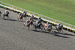 06 September 2009: The field passes the grandstand for the first time in the 19th running of the Pacific Classic at Del Mar Race Track, Del Mar, CA