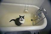 Tabby cat sits in a tub.