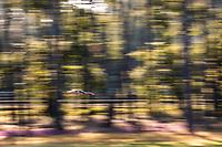 #71 INCEPTION RACING - Ferrari 488 GTE EVO: Brendan Iribe - Ollie Millroy - Ben Barnicoat, 24 Hours of Le Mans , Test Day, Circuit des 24 Heures, Le Mans, Pays da Loire, France