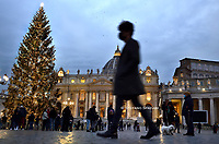 Christmas tree in St. Peter square at the Vatican.14 december 2020