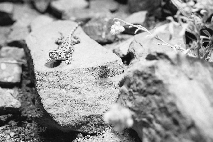 Image Ref: CA570<br /> Location: Desert Park, Alice Springs<br /> Date of Shot: 17.09.18