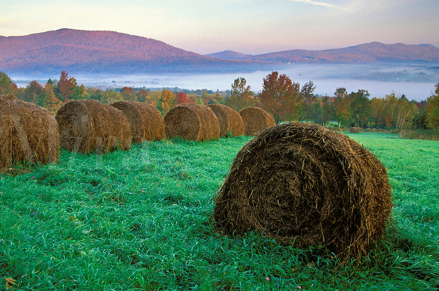 Field with rolled bales of hay at sunrise, Danby Four Corners, Rutland County, Vermon