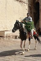 Reiter inJodhpur (Rajasthan), Indien