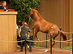 13 September 2010.  Hip #196 Mr. Greeley - Sleepytime (IRE) filly sold for $625,000 at the Keeneland September Yearling Sale.  Consigned by Taylor Made.