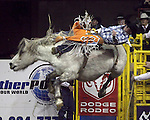 1/25/09--Photo by Rick Davis--PRCA cowboy Tim Shirley of Conifer, Colorado scores an 82point bareback bronc ride on the bronc Silver Moon during final round action of the 103rd National Western Stock Show and Rodeo in Denver, Colorado. Tim finished with a 3 head average of 254 points to tie for first place in PRCA Bareback riding with Dustin Reeves of Owanka, South Dakota.