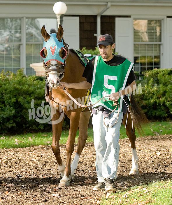 Adios Vaquero before The Delaware Park Arabian Juvenile Championship at on 11/2/11