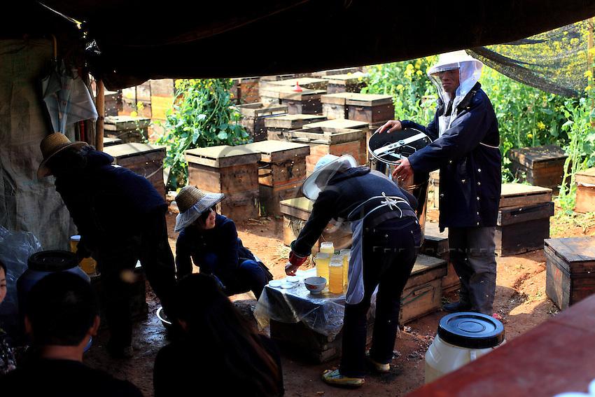 Mise en pot de miel sur le terrain.///Putting the honey in a jar on the spot.