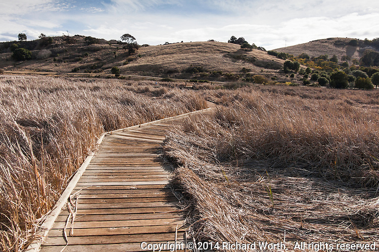 A wooden pathway charts a path through dry grasses at Coyote HIlls Regional Park, Fremont, California.