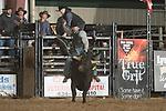 SEBRA - Chatham, VA - 3.10.2018 - Bulls & Action