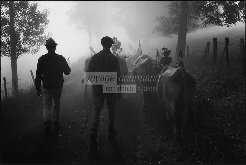 Europe/France/Midi-Pyrénées/12/Aveyron/Env de St-Côme d'Olt:Passage du troupeau de la famille Rieucau  dans la brume matinale lors de la transhumance en Aubrac