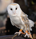 An Owl at Warner Bros. World Premiere of Legend of the Guardians: The Owls of Ga'Hoole held at The Grauman's Chinese Theatre in Hollywood, California on September 19,2010                                                                               © 2010 Hollywood Press Agency