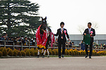 FUNABASHI,JAPAN-MARCH 20: Fan Dii Na,ridden by Yasunari Iwata, after winning the Flower Cup at Nakayama Racecourse on March 20,2017 in Funabashi,Chiba,Japan (Photo by Kaz Ishida/Eclipse Sportswire/Getty Images)