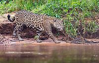 Brazil - The Pantanal