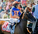 ARLINGTON HEIGHTS, IL - AUGUST 13: Elusive Million #11, ridden by Brice Blanc during the post parade before the Beverly D. Stakes at Arlington International Racecourse on August 13, 2016 in Arlington Heights, Illinois. (Photo by Jon Durr/Eclipse Sportswire/Getty Images)