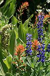 FB-S147 Mountain Wildflowers