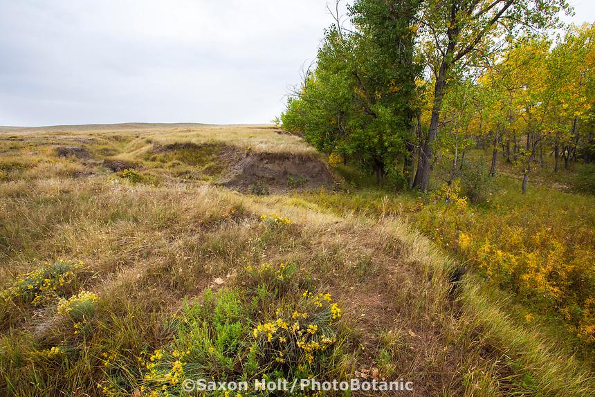 Erosion by creek drainage, West Bijou Ranch, Strasburg Colorado; managed by Savory Institute,