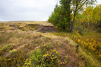 Erosion by creek drainage, West Bijou Ranch, Strasburg Colorado; managed by Savory Institute,